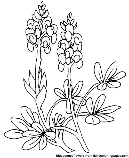 Bluebonnet Flower Coloring Page