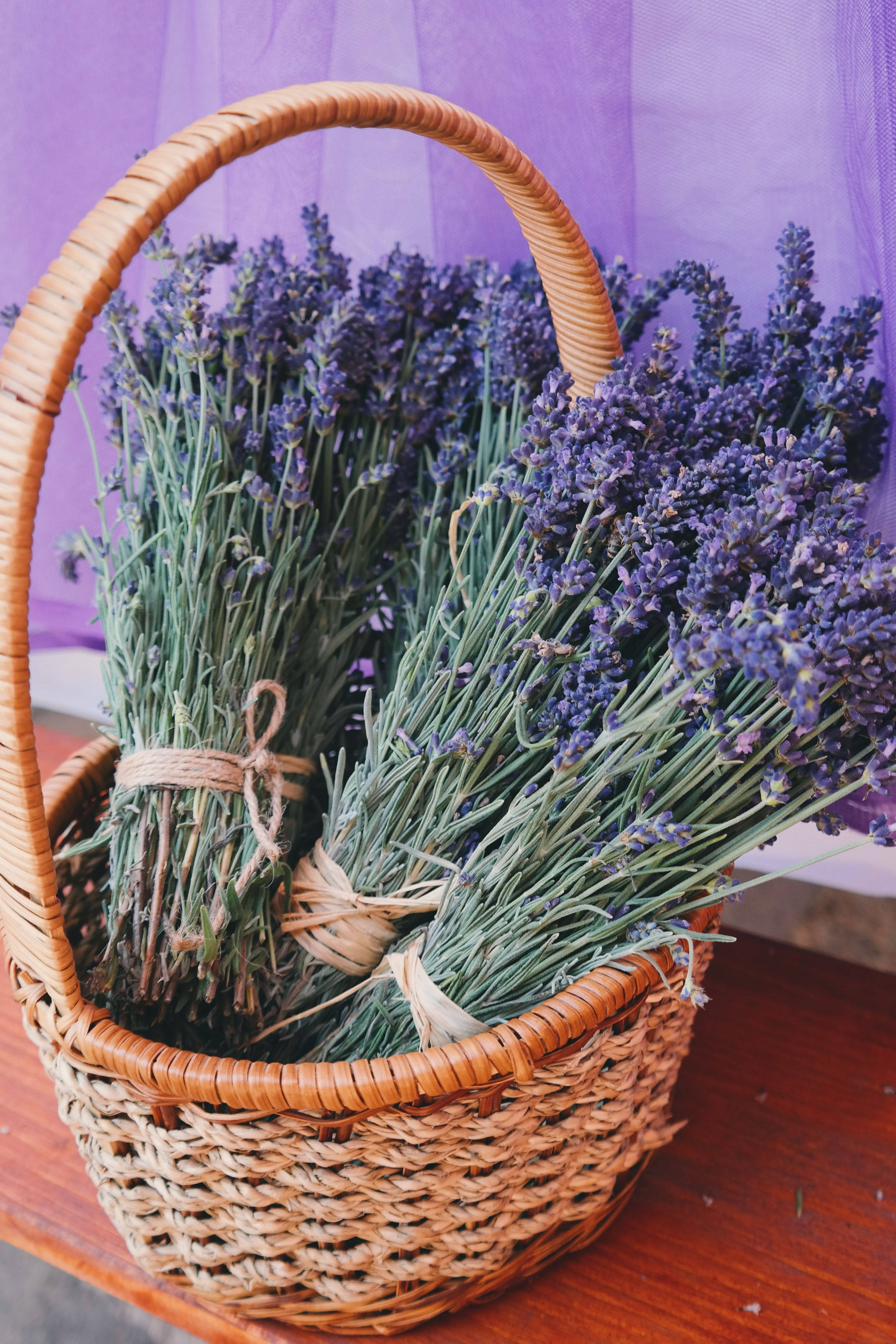 Growing And Caring For Lavender Plants Lavender Plant Care Lavender Flowers Lavender Plant
