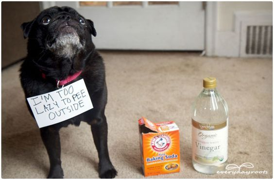 3 Natural Homemade Cleaners To Remove Pet Stains Amp Odors