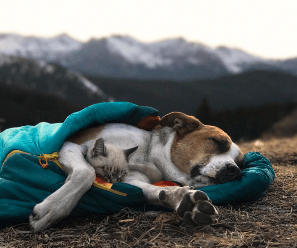 Dog Adventure Shirt Dogadventureshirt Dog Insurance Dog