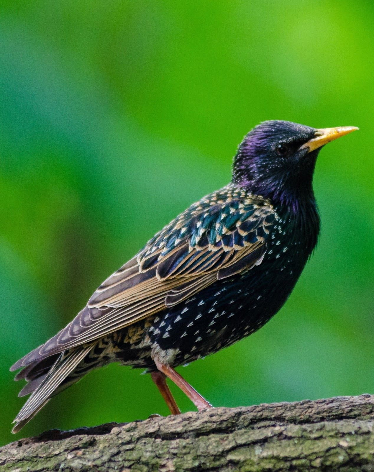 About Wild Animals Do Bird Songs Have Meaning Animals Birds Reptiles Pet