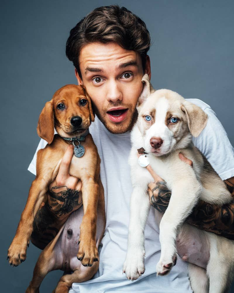 9 Photos Of Liam Payne Cuddling With Puppies That'll Make You Melt