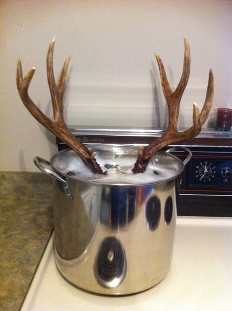 Diy european deer skull mount not for the squeamish it diy european deer skull mount not for the squeamish it stinks solutioingenieria Image collections