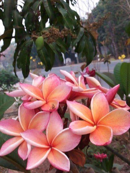 Flowers and nature.ดอกไม้กับธรรมชาติ – Communauté – Google+