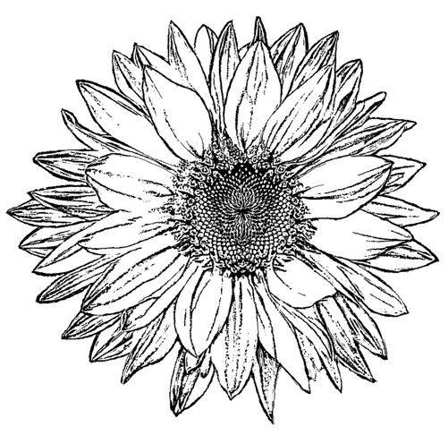 Sunflower Stencil Outline | www.imgkid.com - The Image Kid ...