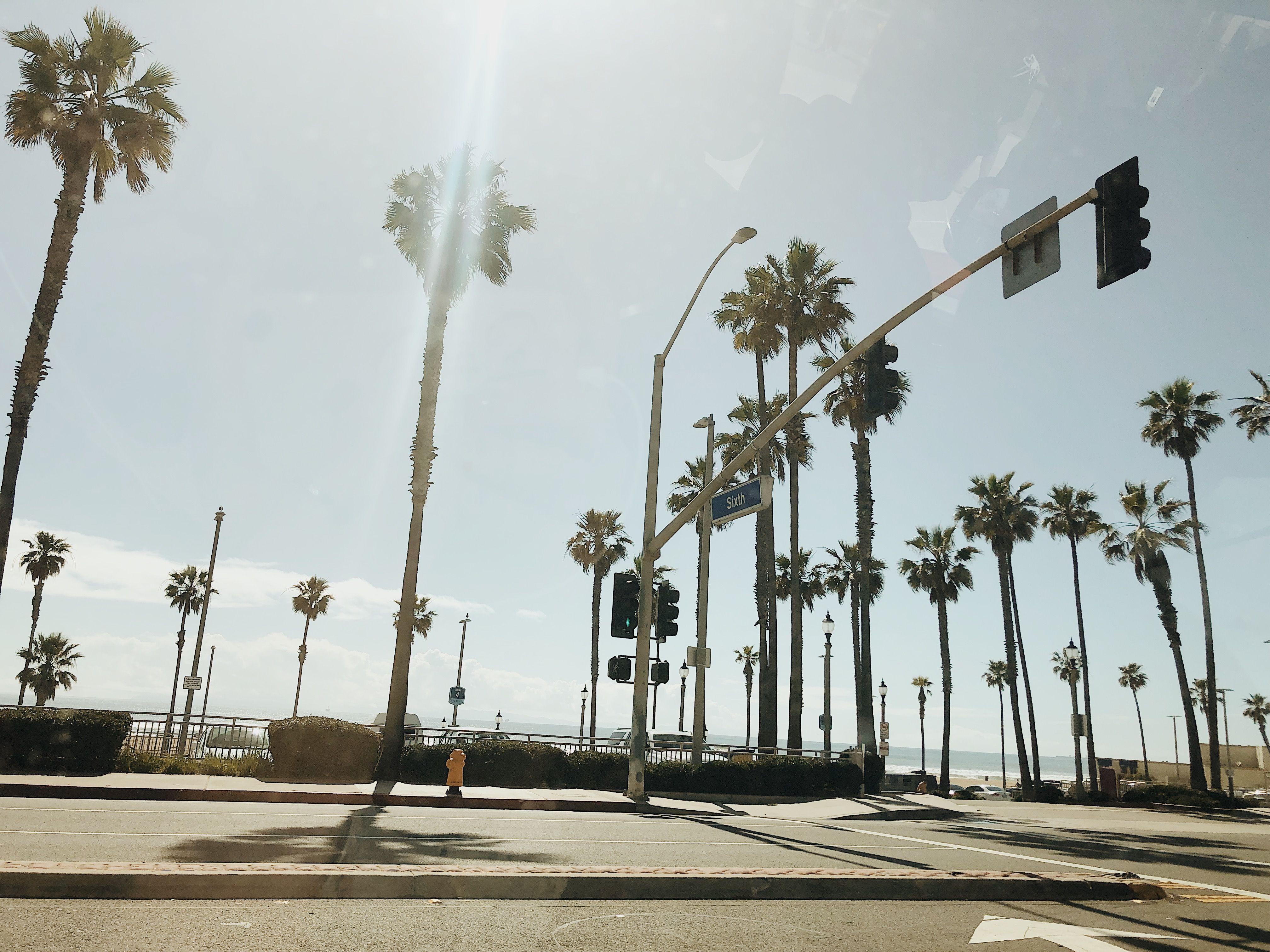 santamonicabeach california palmtress springbreak