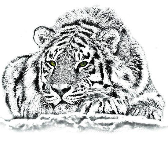 Fosterginger Pinterest Com More Pins Like This One At Fosterginger Pinterest No Pin Limits Fo Tiger Zeichnung Tierzeichnung Erstaunliche Zeichnungen