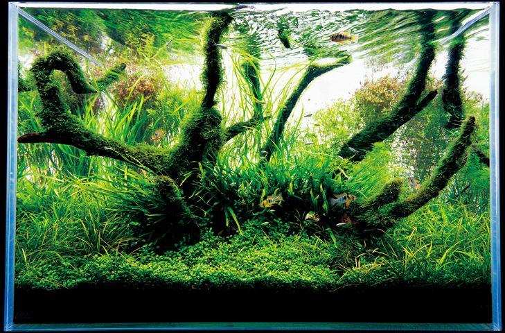 Japanese aquarium design =the best | アクアスケーピング, 水族館の魚, 水族館 ...