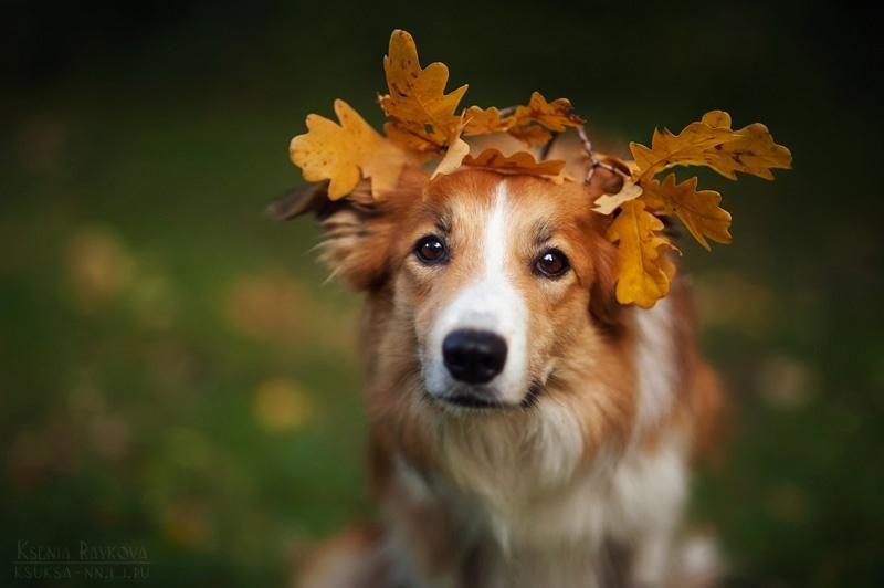 Autumn Bamby by Ksenia Raykova: http://goo.gl/tA9upU