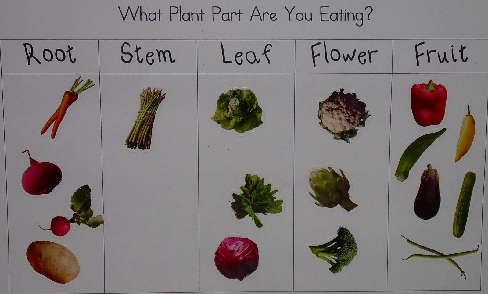 Parts Of Plants With Stickers