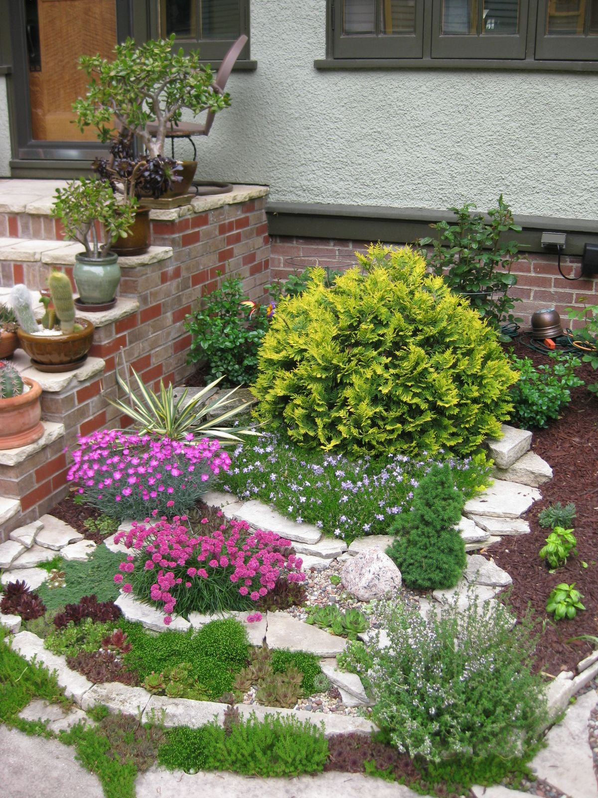 The Miniature Garden | Irish moss, Miniature gardens and Miniatures