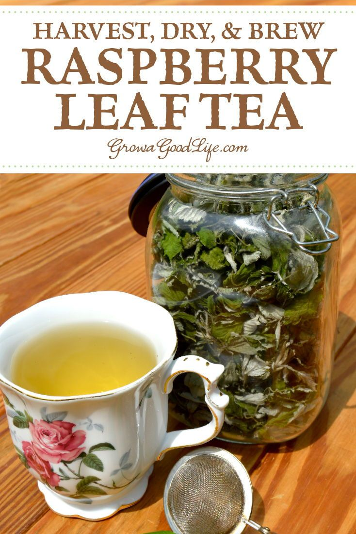 Photo of How to Harvest & Preserve Red Raspberry Leaf Tea