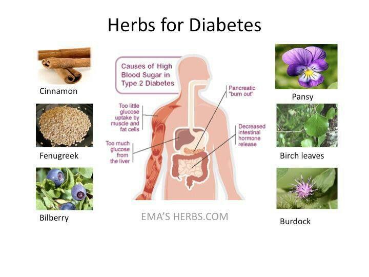 Herbs for Diabetes