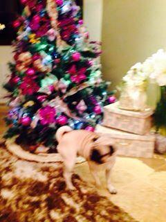 Porque casa com cães o Natal é mais divertido...