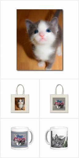 Cute, personalized cat gift ideas. http://www.zazzle.com/mlcpets ...