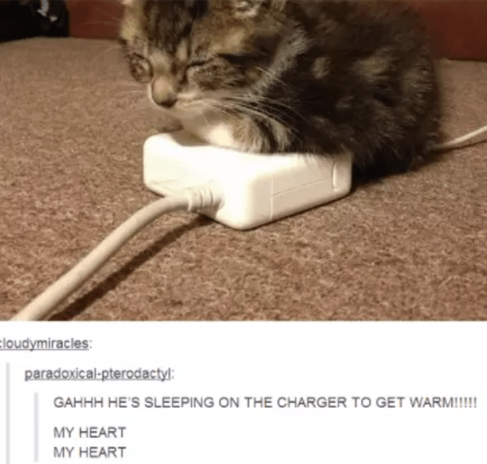 23 Tumblr Posts About Kittens That Will Make Your Day