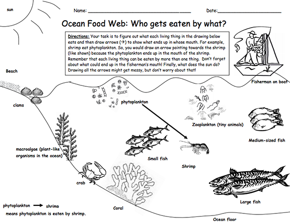 Heres a lesson and materials on a marine food web – Marine Biology Worksheets