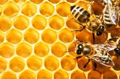 Propolisul, un adevărat antibiotic natural http://www.antenasatelor.ro/curiozit%C4%83%C5%A3i/natura/609-propolisul,-un-adevarat-antibiotic-natural.html