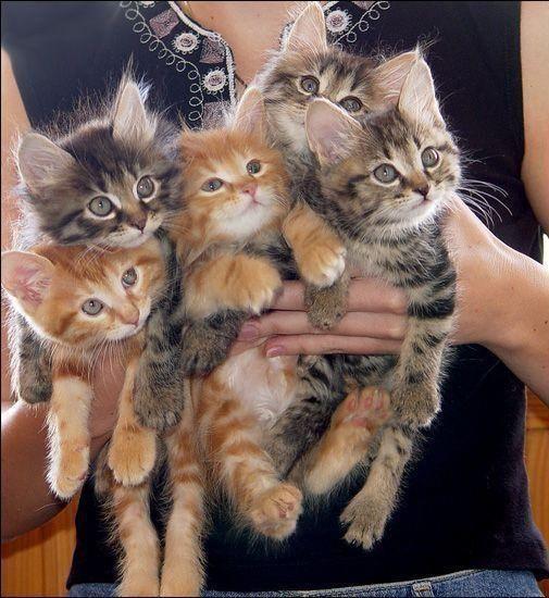 kittiessssss!!!!