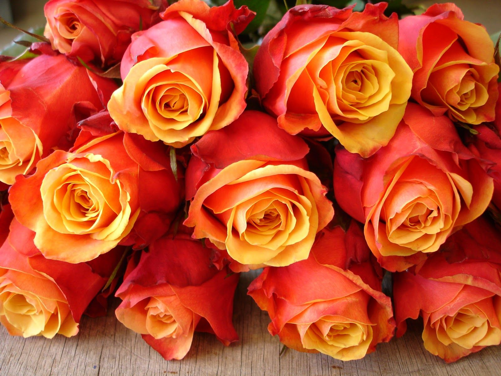 Cherry brandy roses...this is such a beautiful rose. And