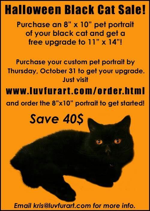 Pet Portrait Black Cat Sale Cats For Sale Pet Portraits Cats