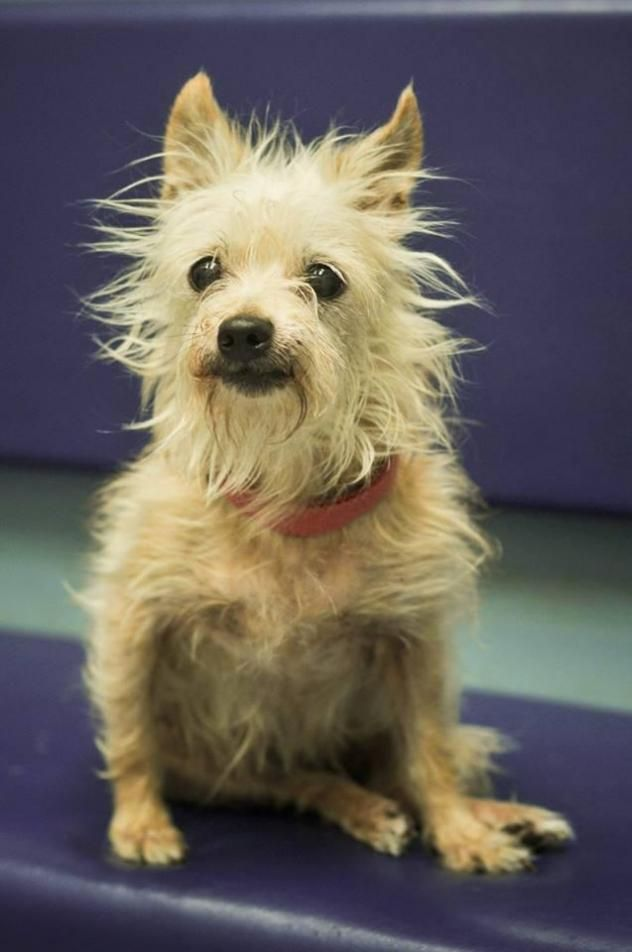 Adopt Milly on Terrier mix dogs, Buffalo animal
