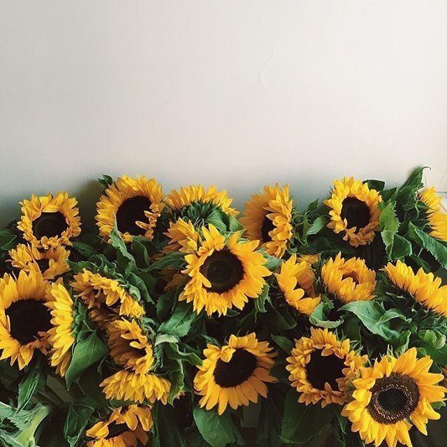 Come on get happy plants pinterest flowers flora and flower power come on get happy mightylinksfo