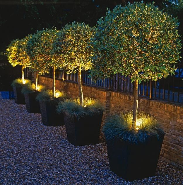 Let there be Night Garden Idea back yards******** Pinterest