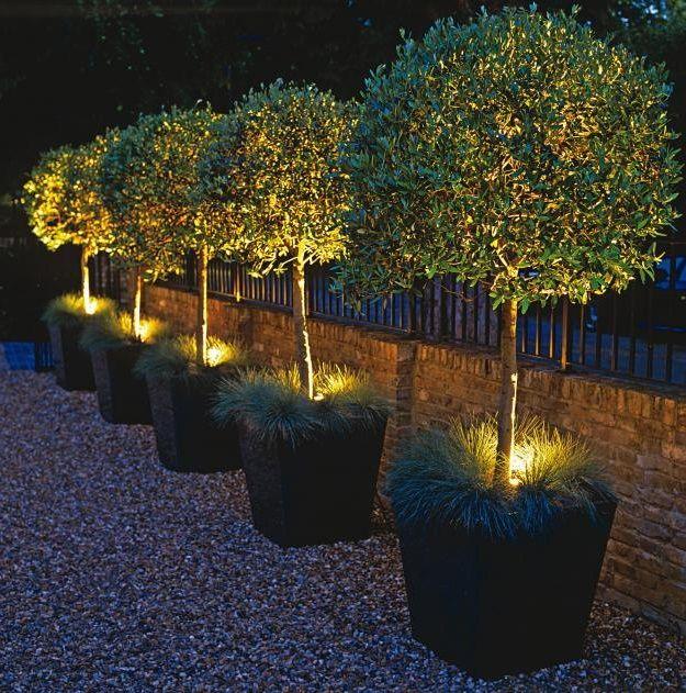 Am Weg Entlang Kübel Mit Kleinen Bäumen | Garten | Pinterest