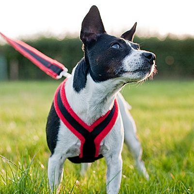 Dog Games Original Fleece Lined Dog Harness Solid Colors Dog