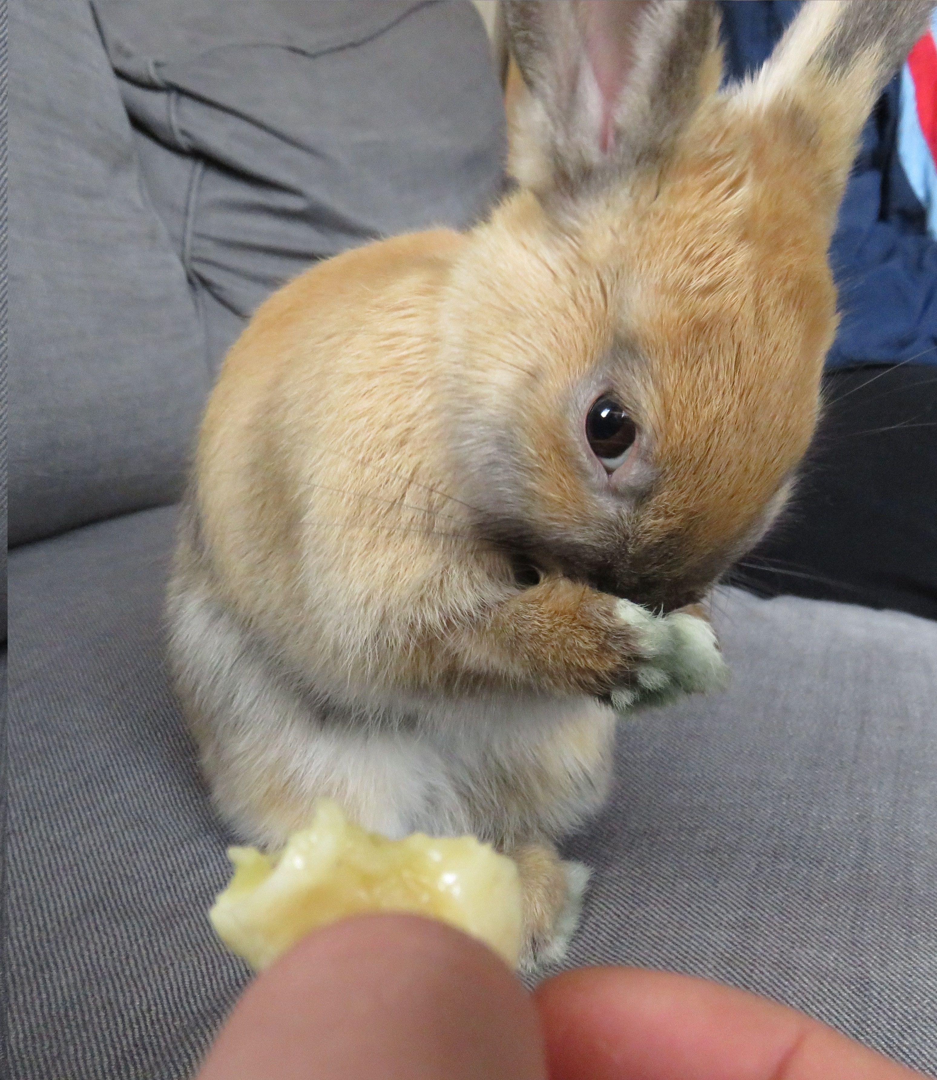 Hamster Eating Banana Meme