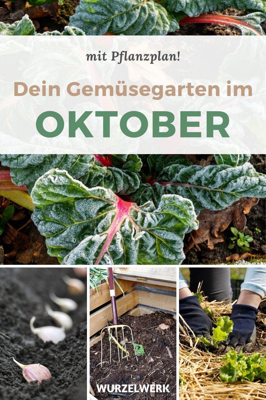 11 Gemüse, die du im Oktober noch säen und pflanzen kannst