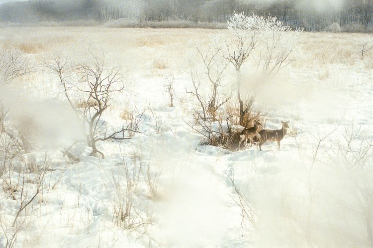Deer Wonderland (Takeshi Suga)