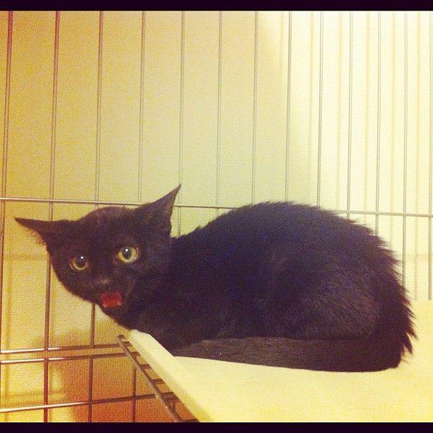 すみちゃん なにやら怒ってる 怒っても かわいいな Y Kamimura Webstagram Cats Animals Cute