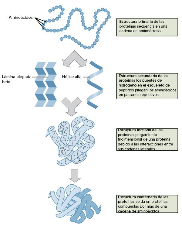 órdenes De La Estructura De La Proteína Artículo Khan