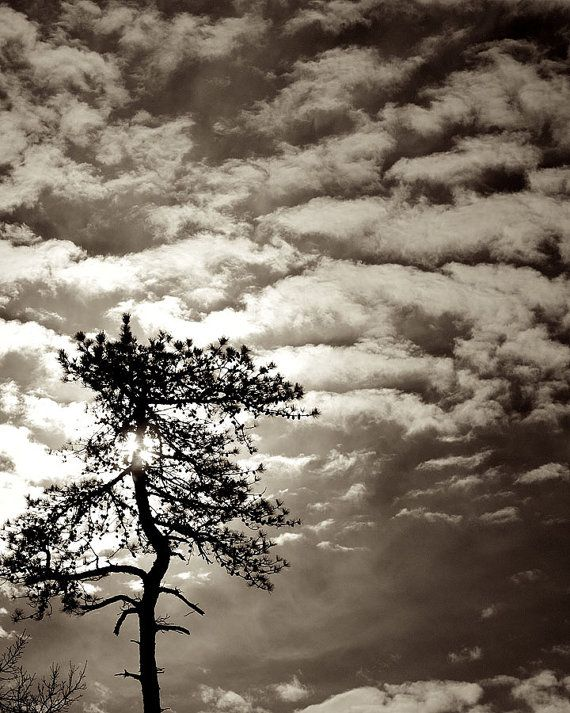 Lone Pine Black And White Landscape Photography Nature Art Prints Tree Wall Art Classic Home Decor Landscape Photography Nature Black And White Landscape Landscape Photography