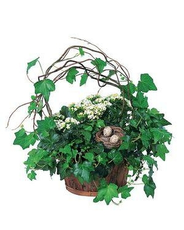 Kalanchoe and Ivy Basket in 2020 Basket flower