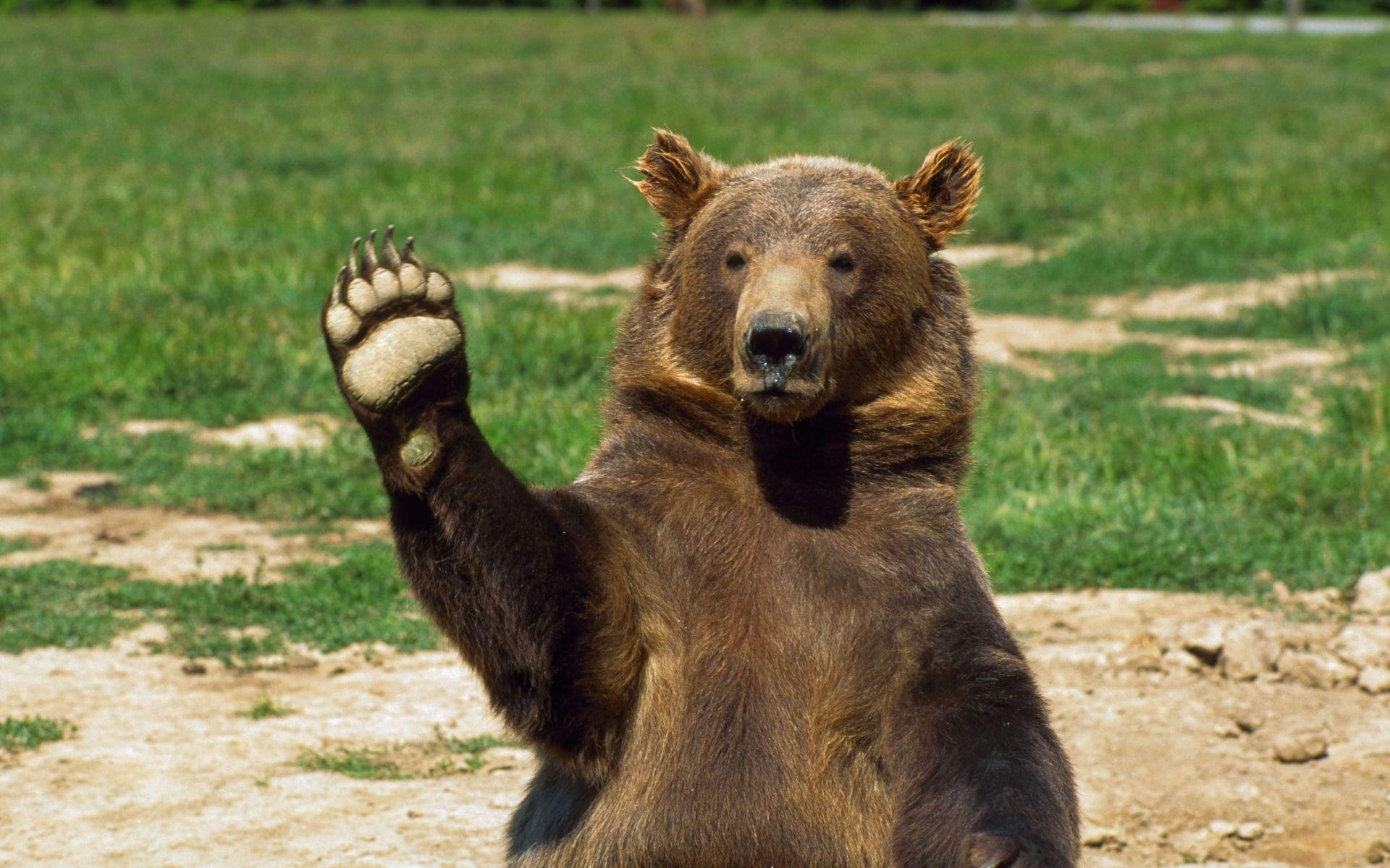 Bear Wallpapers High Resolution Free Download Bear