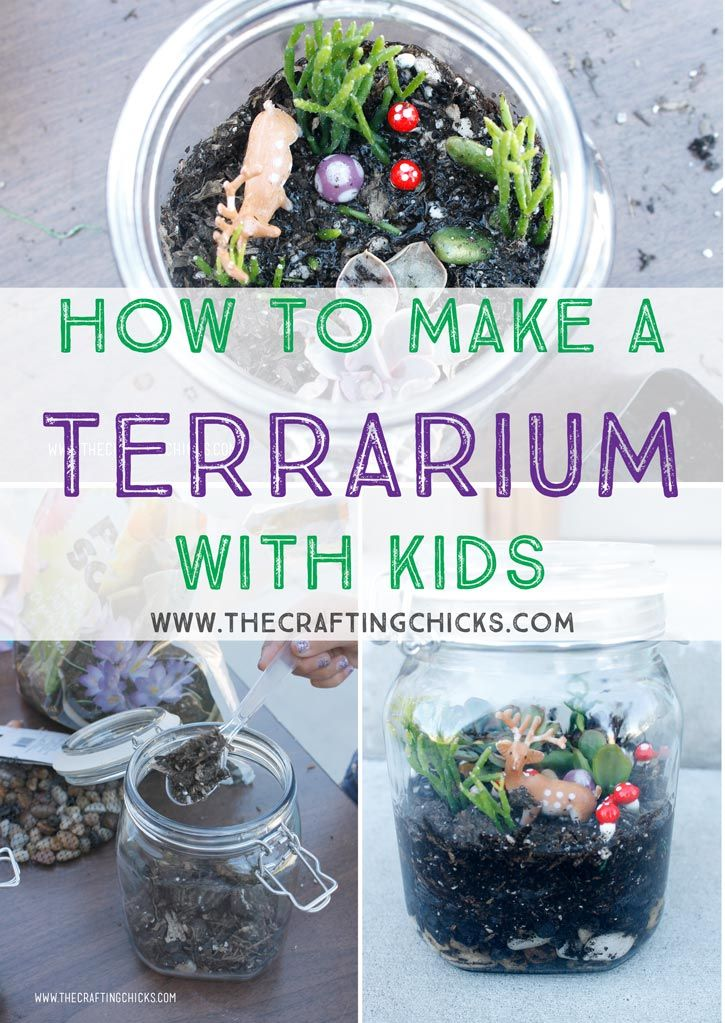 Make A Cardboard 3d Model Of Your Area Using Local: How To Make A Terrarium With Kids