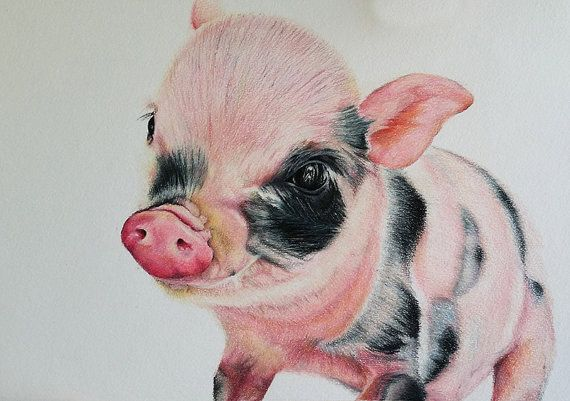 Original Colored Pencil Drawing, Realistic Small Piglet ...