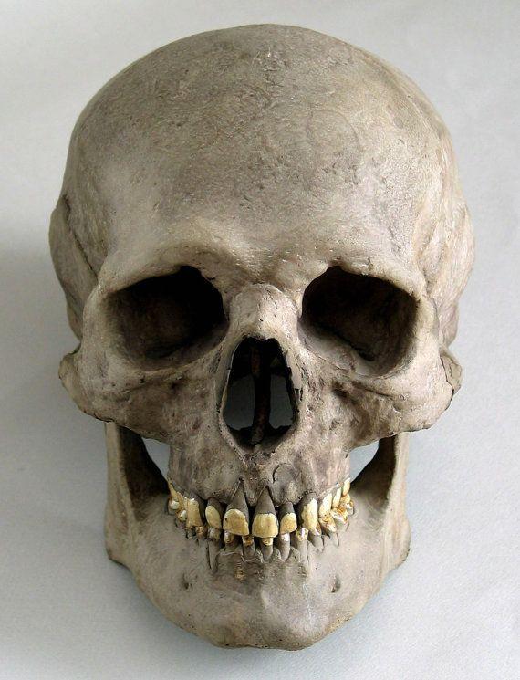 human skull replica vintage logo