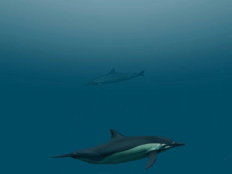 Under water!!!