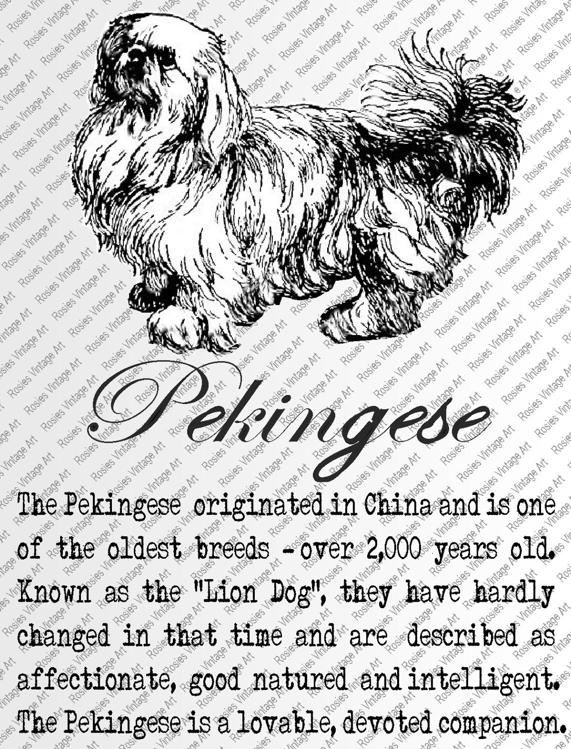 PEKINGESE DOWNLOAD INSTANT Digital Vintage Art with Description Printable Frame Cards Fabric Iron On by RosiesVintageArtShop on Etsy