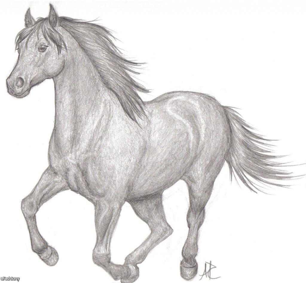 Pencil Sketches Of Horses Pencil Sketches Of Horses Drawing Arts