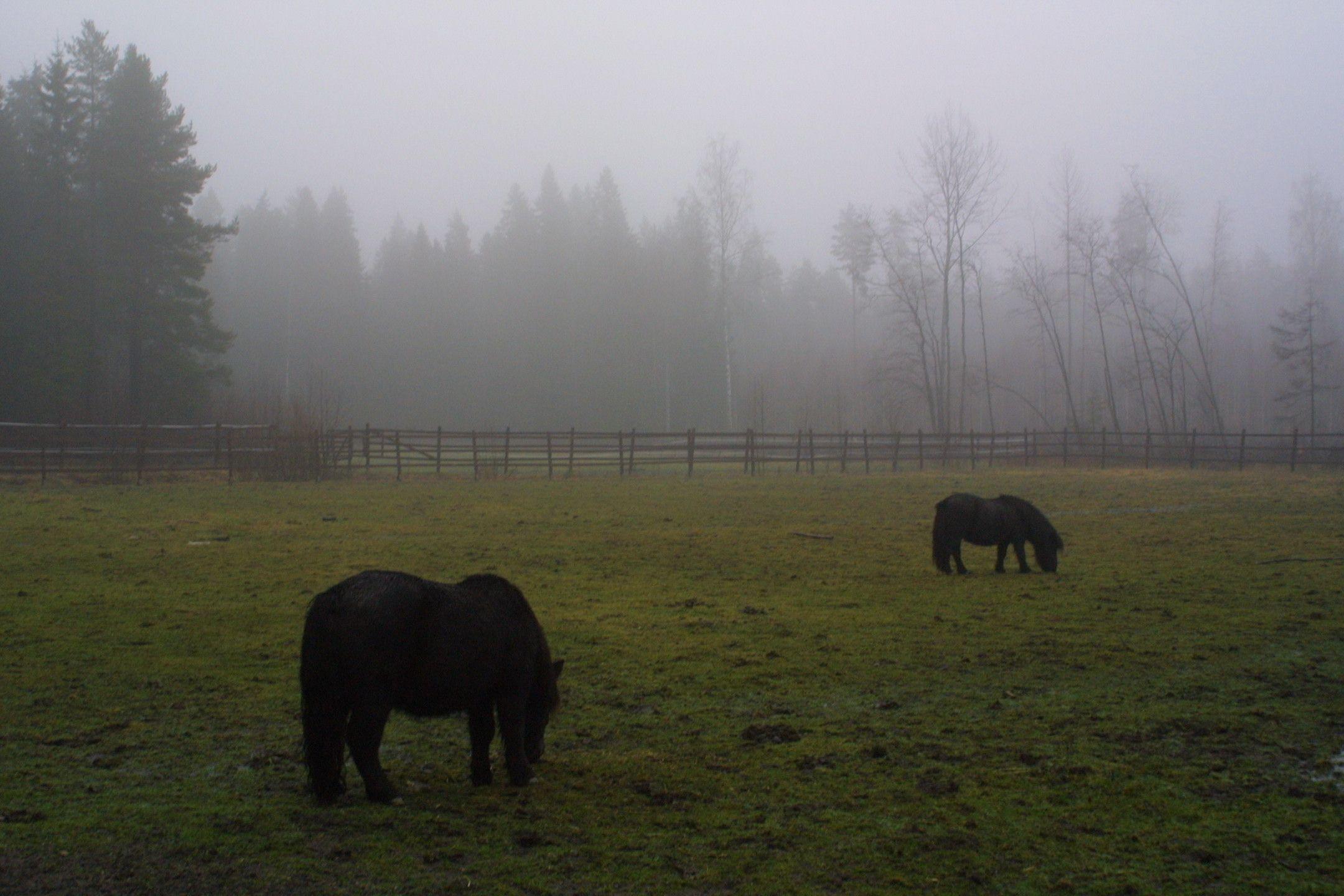 #equstom #ratsastus # hevoset #horses