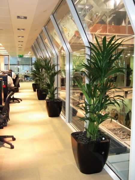 Gentil Kentia Palm In A Quadik Planter.....the Perfect Office Plant Combination.  Container Available From @plantfinderpro ...