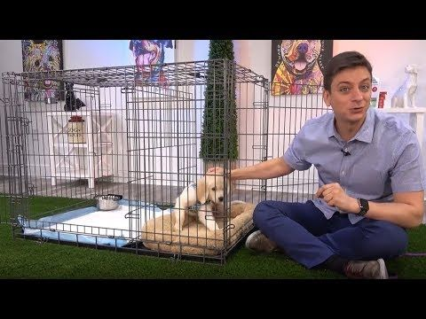 World Famous Dog Trainer Zak George Demonstrating The Potty Training Puppy Apartment See In This Fun Video Featuring Rosie Golden