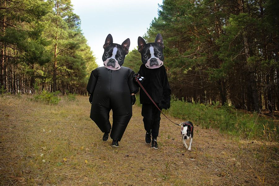 Halloween Costumes To Dress Like The Boston Terrier Dog Boston