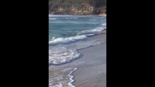 Mira a este adorable canguro saltando y jugando en el mar - usuario Brownie 695299