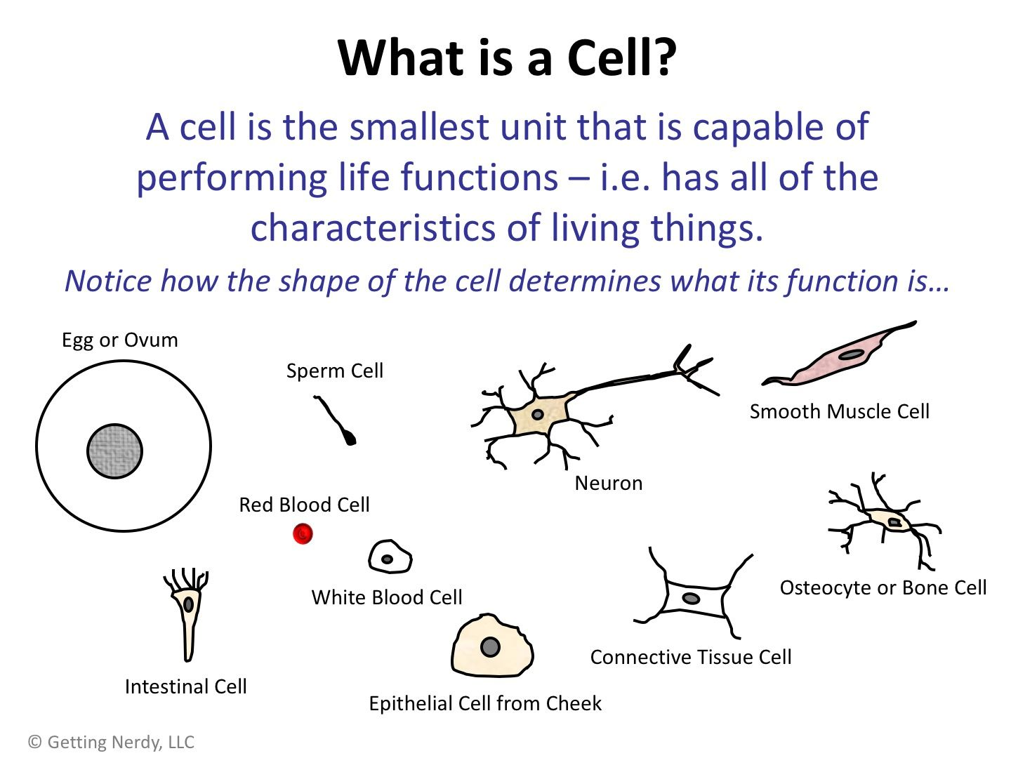 Cell Theory Worksheet
